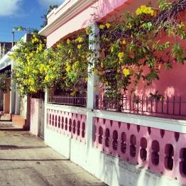 Culebra 8
