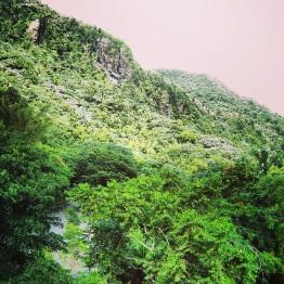El Yunque 10