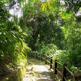 El Yunque 7