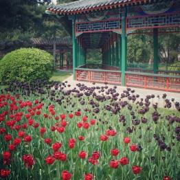 Beijing (230)