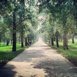 Beijing (374)