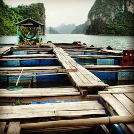 Halong Bay (12)