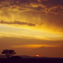 Maasai Mara 61