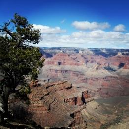 Grand Canyon (6)