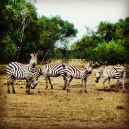 Maasai Mara 30