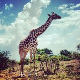 Maasai Mara 31
