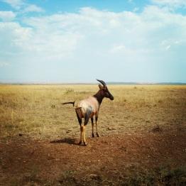 Maasai Mara 33