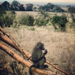 Maasai Mara 39