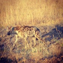 Maasai Mara 41