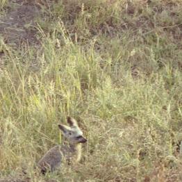 Maasai Mara 42