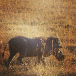 Maasai Mara 44