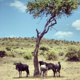 Maasai Mara 46