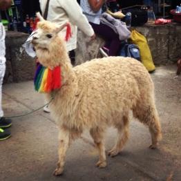 Cusco (18)