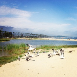 Santa Barbara (7)
