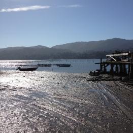 Tomales Bay (14)