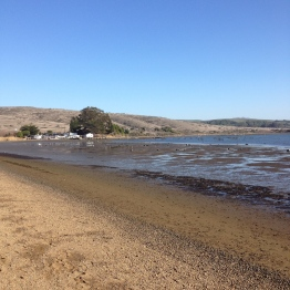 Tomales Bay (17)