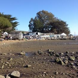 Tomales Bay (8)
