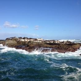 Hout Bay (4)